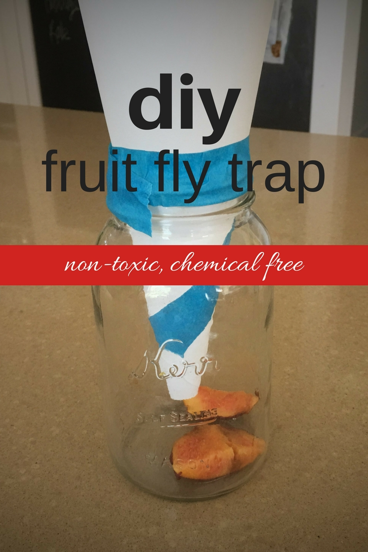 how to use searles fruit fly trap